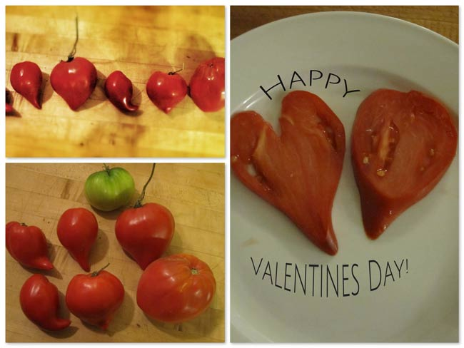 Love Apples  or  Pomme d'amour (from the belief in the tomato's aphrodisiacal powers)