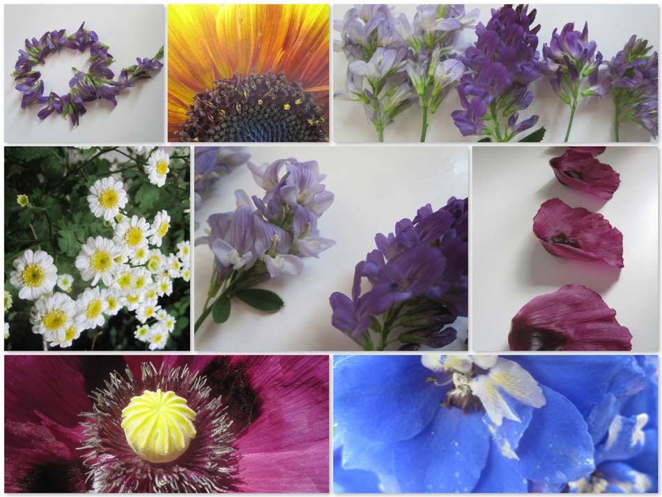 A collection of flowers from the last week in June. Walk about at Quillisascut Farm.