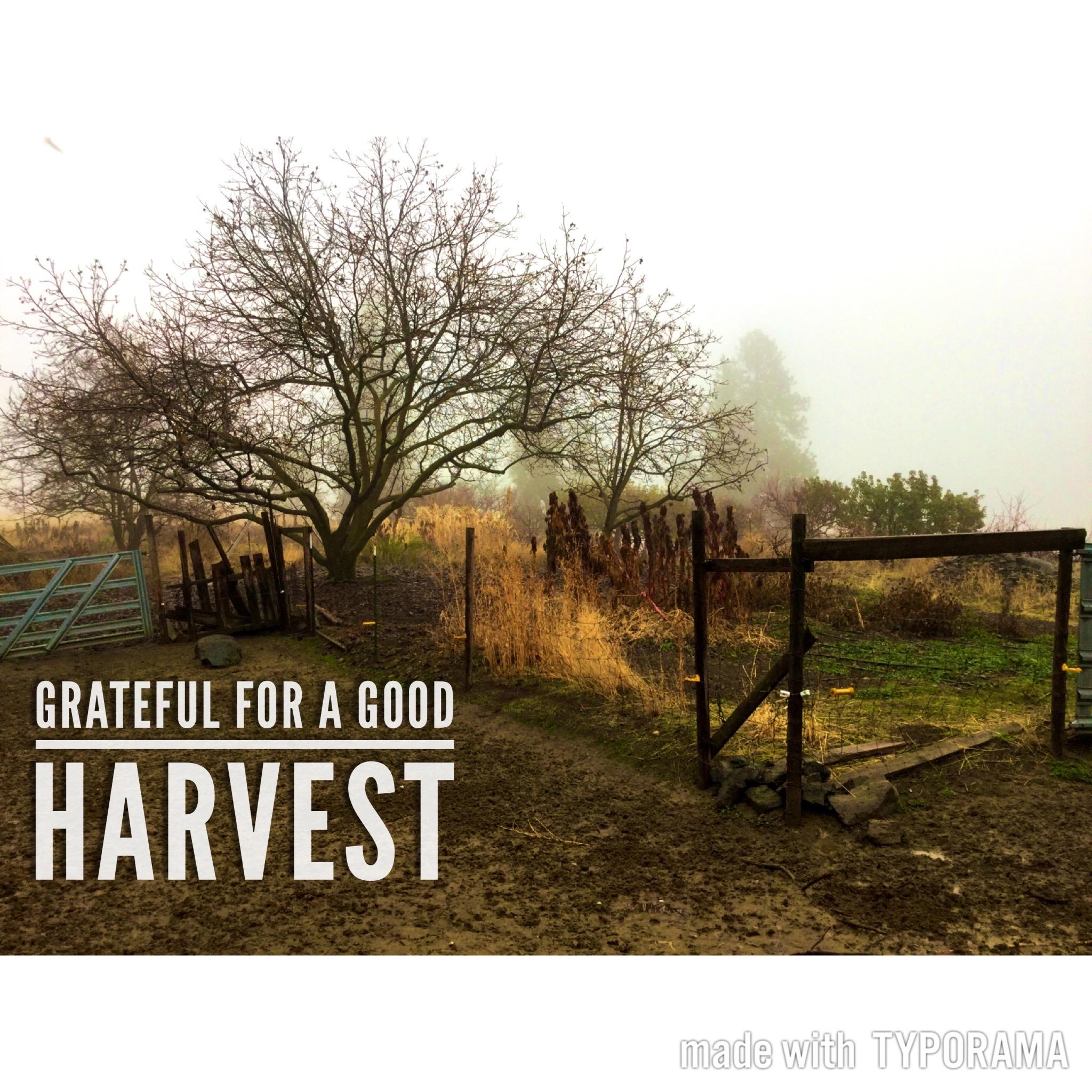 Grateful harvest at Quillisascut Farm