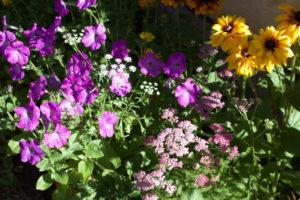 FlowerInfrontOfSchool