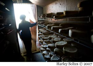 Lora Lea enters the cheese cellar